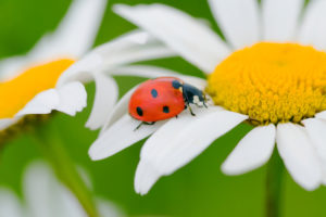 Lesson of the Ladybug . . . Be an Overcomer!